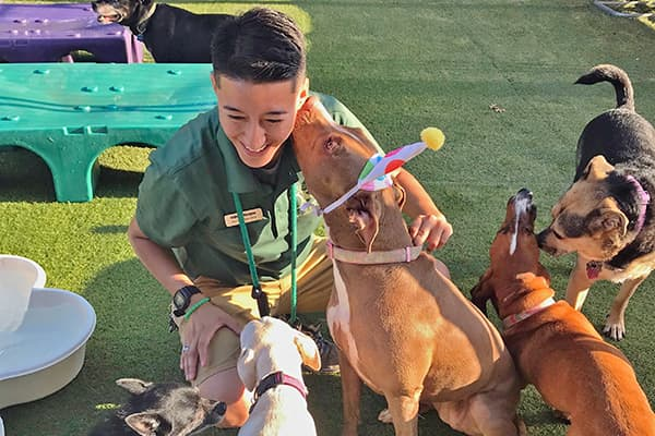 Boarding staff member playing with dogs