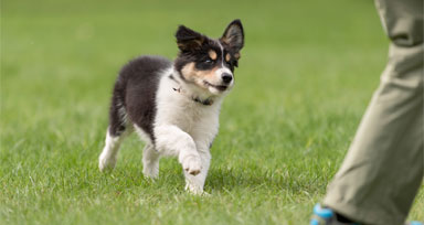 Group Dog Training Classes Round Rock Georgetown | Action